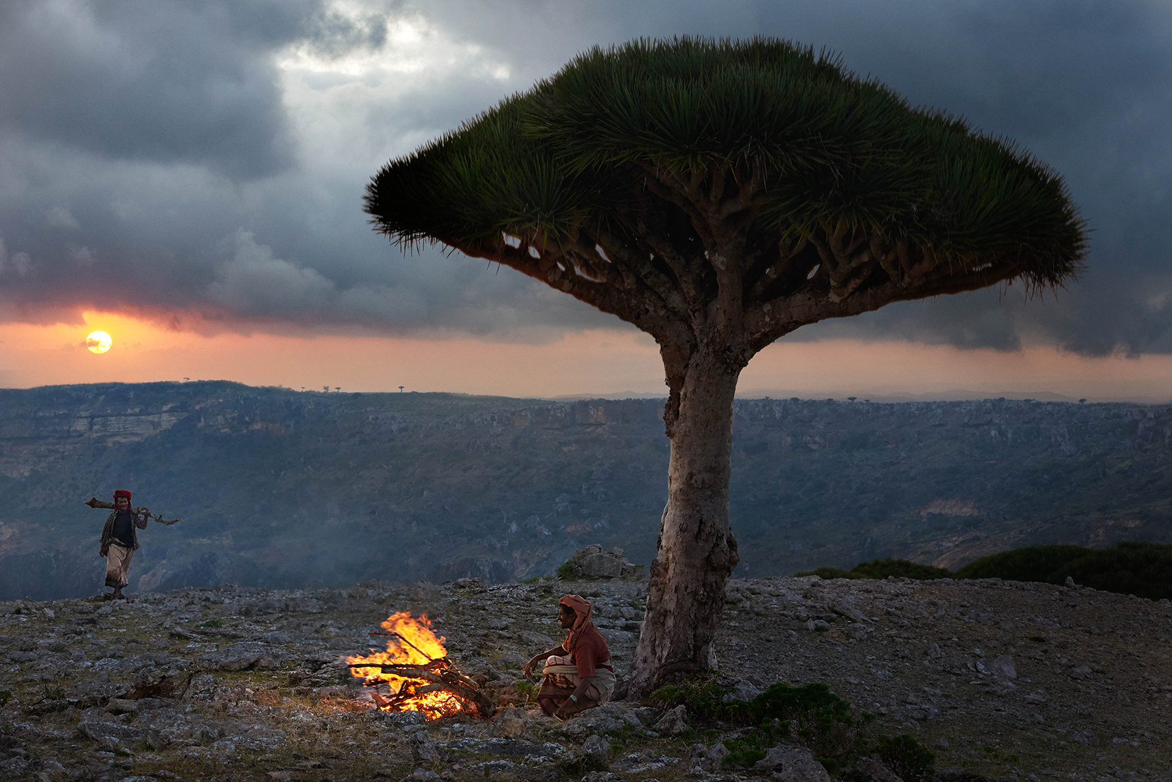 People | Bedouin sitting under a dragon's blood tree, Island of Socotra, Yemen